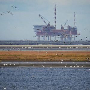 OPEC Entscheidung rückt näher – Ölpreise bleiben in Bewegung